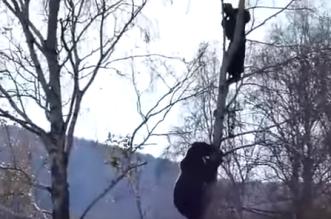 روسي يتسلق الشجر هربا من الدوب