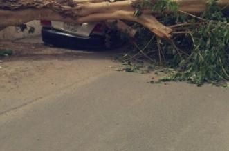 بالصور.. الرياح العاتية تقتلع الأشجار في جدة - المواطن