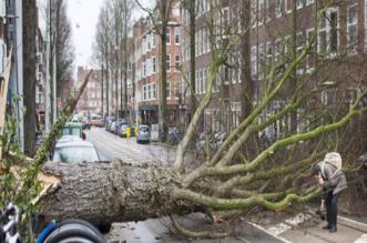 شاهد الرياح العاتية تقتلع البشر والشجر في هولندا - المواطن