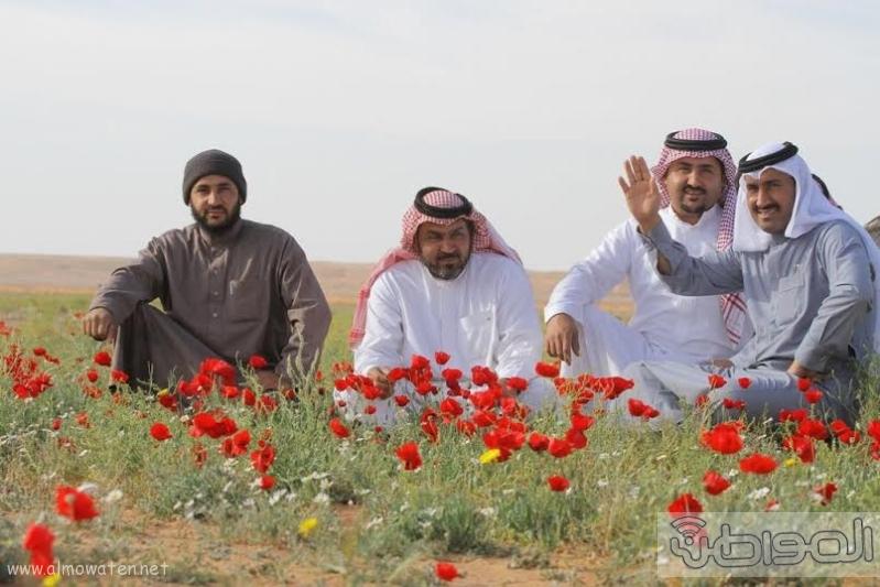 زهور الديدحان ب تمريات الجوف2