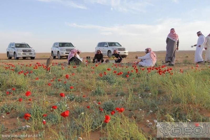 زهور الديدحان ب تمريات الجوف3