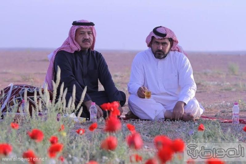 زهور الديدحان ب تمريات الجوف5