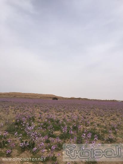 زهور3