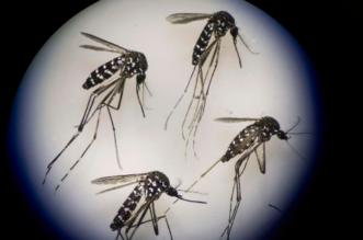 توقعات بانتهاء عدوى فيروس زيكا خلال عامين أو ثلاثة - المواطن
