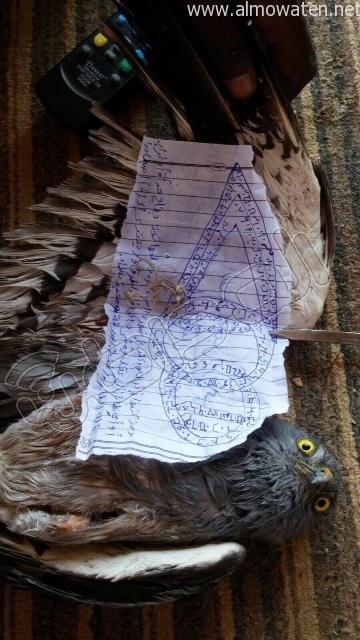 بالصور.. العثور على طائر يحمل عملًا سحريًّا غرب #رفحاء - المواطن
