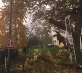 سقوط مؤلم لعامل يقطع فرع شجرة