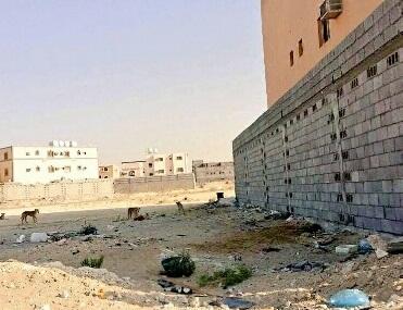 سكان ضاحية الملك فهد بالدمام (2)
