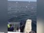 سمكة قرش تفاجئ السياح