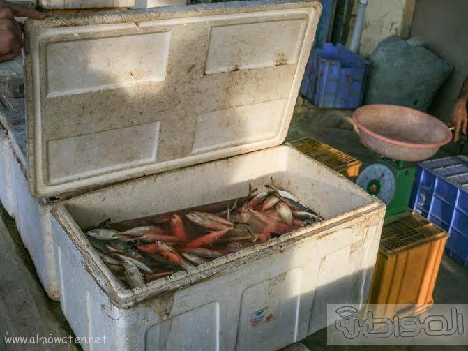 سوق السمك جدة10