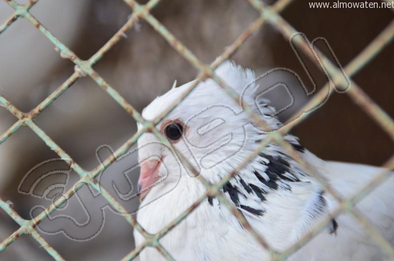 سوق الطيور بجدة (15)
