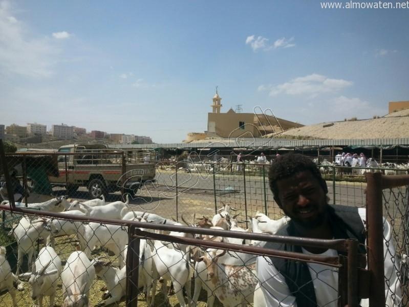 سوق-المواشي-أبها (4)