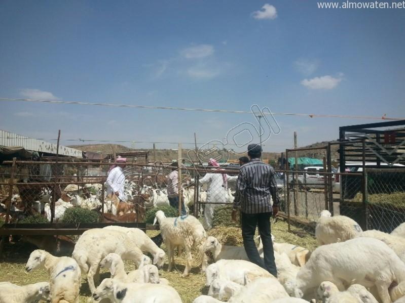 سوق-المواشي-أبها (6)