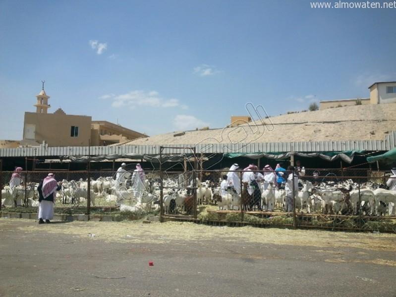 سوق-المواشي-أبها (7)