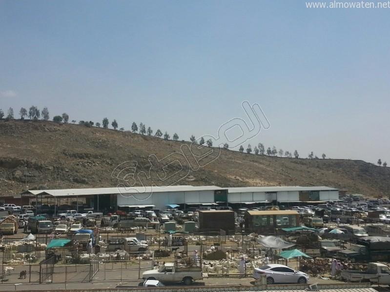 سوق-المواشي-أبها (8)