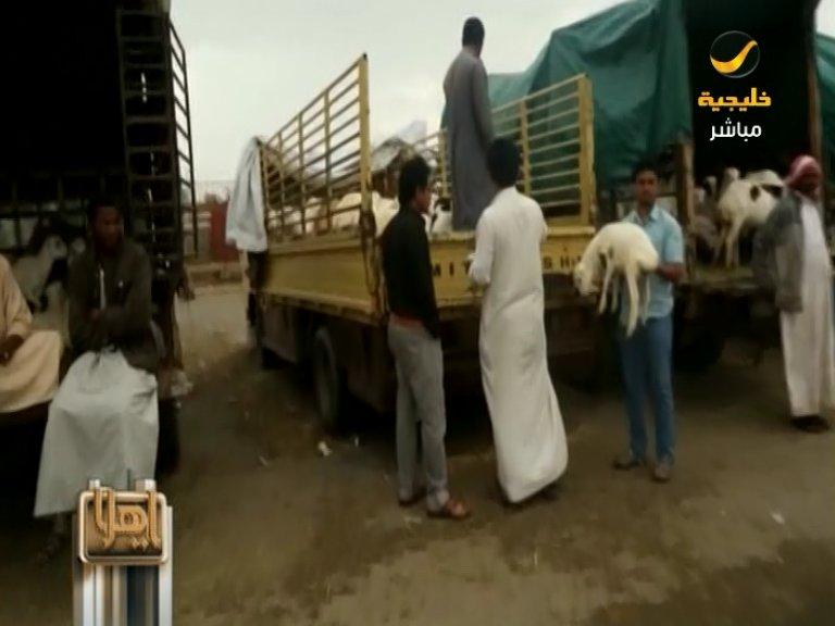 سوق خميس مشيط للماشية شيخه غائب.. والأجانب يخالفون القانون!