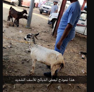 بالصور.. حيوانات مريضة وعمالة مخالفة تحتكر سوق العرضيات