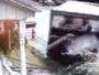 سيارة تصطدم في منزل وسيارة