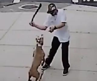 شاب يضرب كلب