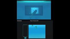 شاهد.. دلافين تتفاعل مع شاشة إلكترونية تحت الماء - المواطن