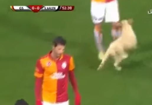 شاهد كلاب تقدحم مبارة في الدوري التركي