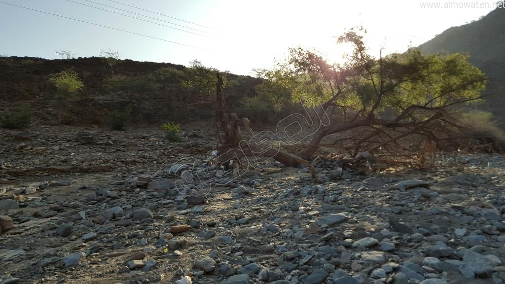 شاهد.. أمطار بني مأجور بـ #عسير تقتلع الأشجار وتجرف معدة صغيرة (1)