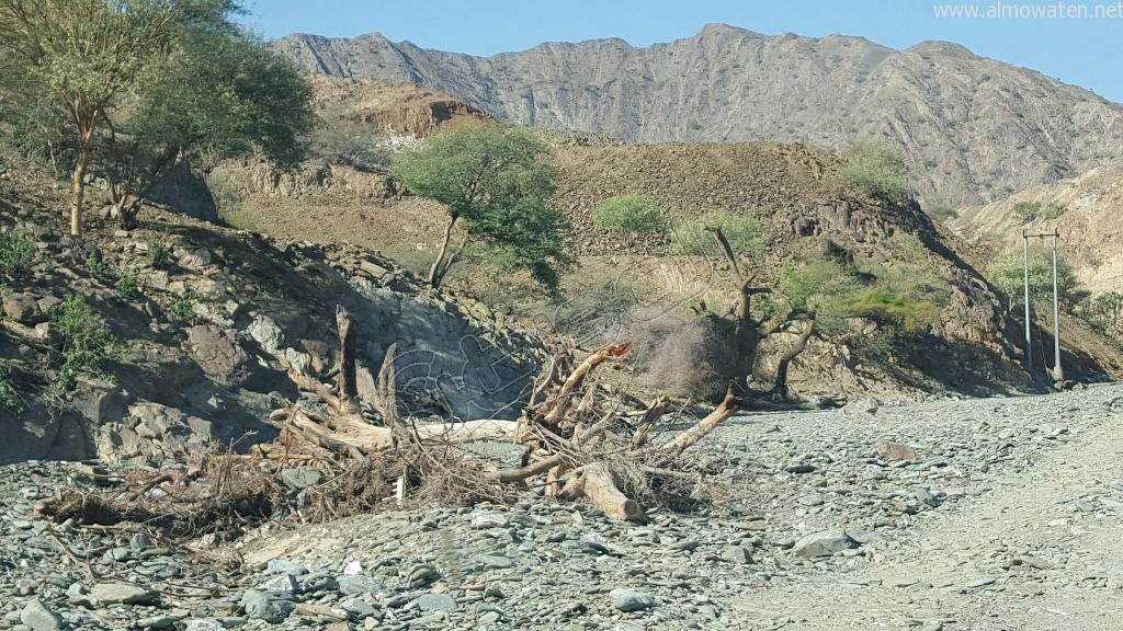 شاهد.. أمطار بني مأجور بـ #عسير تقتلع الأشجار وتجرف معدة صغيرة (10)