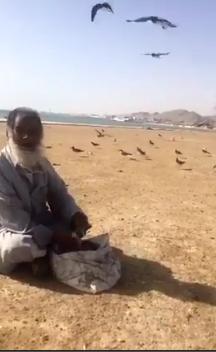شاهد.. سبعيني يطعم طيور النورس على شاطئ أملج يومياً منذ 9 سنوات
