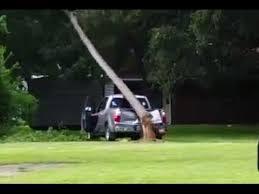 شجرة تسقط على شاحنة