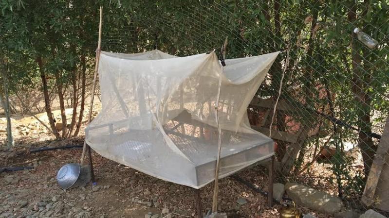 صحة عسير تكشف عن موقفها من إصابات الملاريا بين اهالي تهامة شهران11