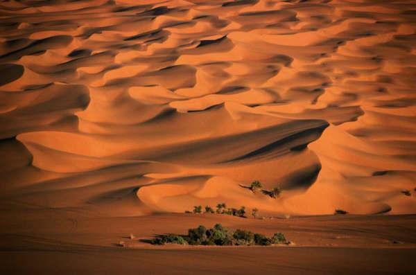 اكتشاف ناب فيل منقرض قبل 325 ألف سنة بصحراء النفوذ - المواطن