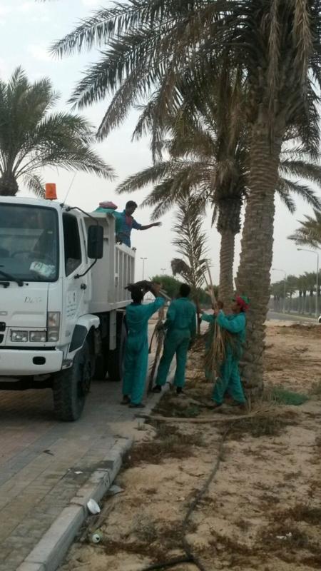 صهاريج وشاحنات مخالفة بالجبيل (2)