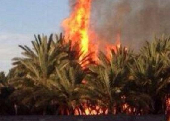 بالصور.. السيطرة على حريق بـ(3) مزارع في دومة الجندل - المواطن