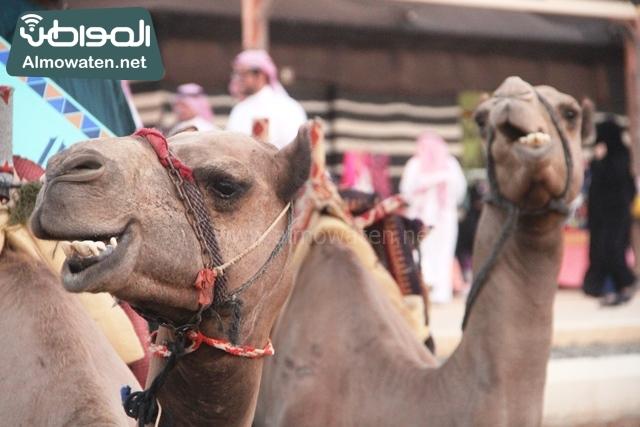 صور جادة عكاظ والفعاليات المصاحبة التي تقام بها في محافظة الطائف (12)