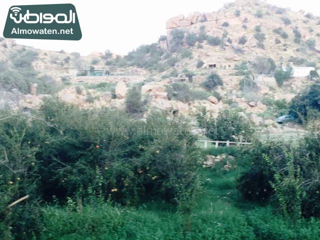 صور وادي ذي غزال بمنطقة الشفاء بمحافظة الطائف ألتقطتها صحيفة المواطن وتضمن عدد كبير من السياح بالمملكة العربية السعودية 