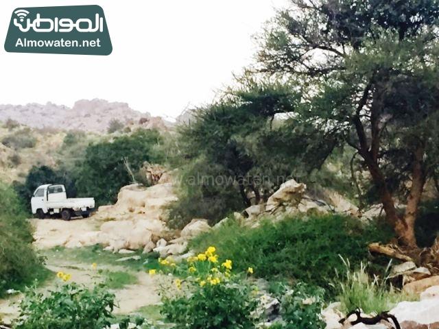 صور وادي ذي غزال بمنطقة الشفاء بمحافظة الطائف ألتقطتها صحيفة المواطن وتضمن عدد كبير من السياح بالمملكة العربية السعودية (8)