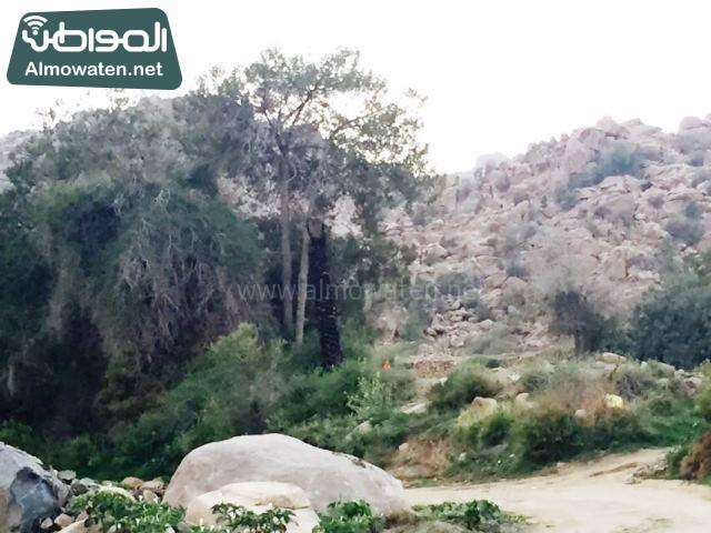 صور وادي ذي غزال بمنطقة الشفاء بمحافظة الطائف ألتقطتها صحيفة المواطن وتضمن عدد كبير من السياح بالمملكة العربية السعودية (9)