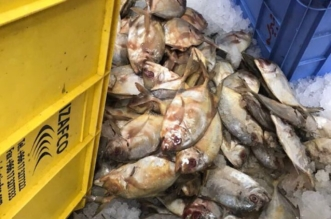ضبط 346 كيلو من اللحوم والاسماك المتعفنة والفاسدة بحائل2