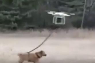 طائرة درون تحمل كلباً في الهواء