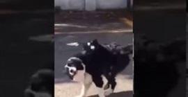 طائر يهاجم كلب