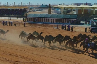 """3 أقسام لكَشْف """"الغش"""" وفَحْص الحيوانات في مهرجان الملك عبدالعزيز للإبل - المواطن"""