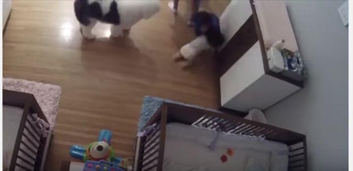 طفل ينقذ شقيقه الرضيع