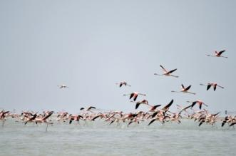 ثلث طيور أمريكا الشمالية معرضة للانقراض! - المواطن