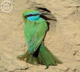 طيور8
