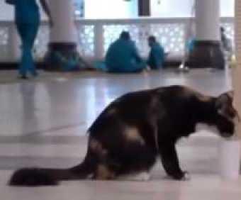 عامل بالحرم يسقي قطة من ماء زمزم ويروي عطشها