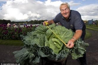 شاهد.. عجوز يزرع أكبر نبتة كرنب في العالم - المواطن