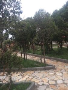 عدد من الإبل تلتهم اشجار منتزه الشرف بالنماص بعيدا عن الرقابه3