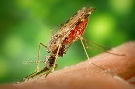 """بالصور.. اكتشاف عقار جديد لمقاومة """"طفيل"""" الملاريا - المواطن"""