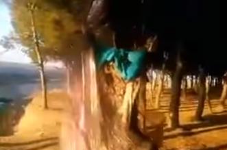 غابات المغرب
