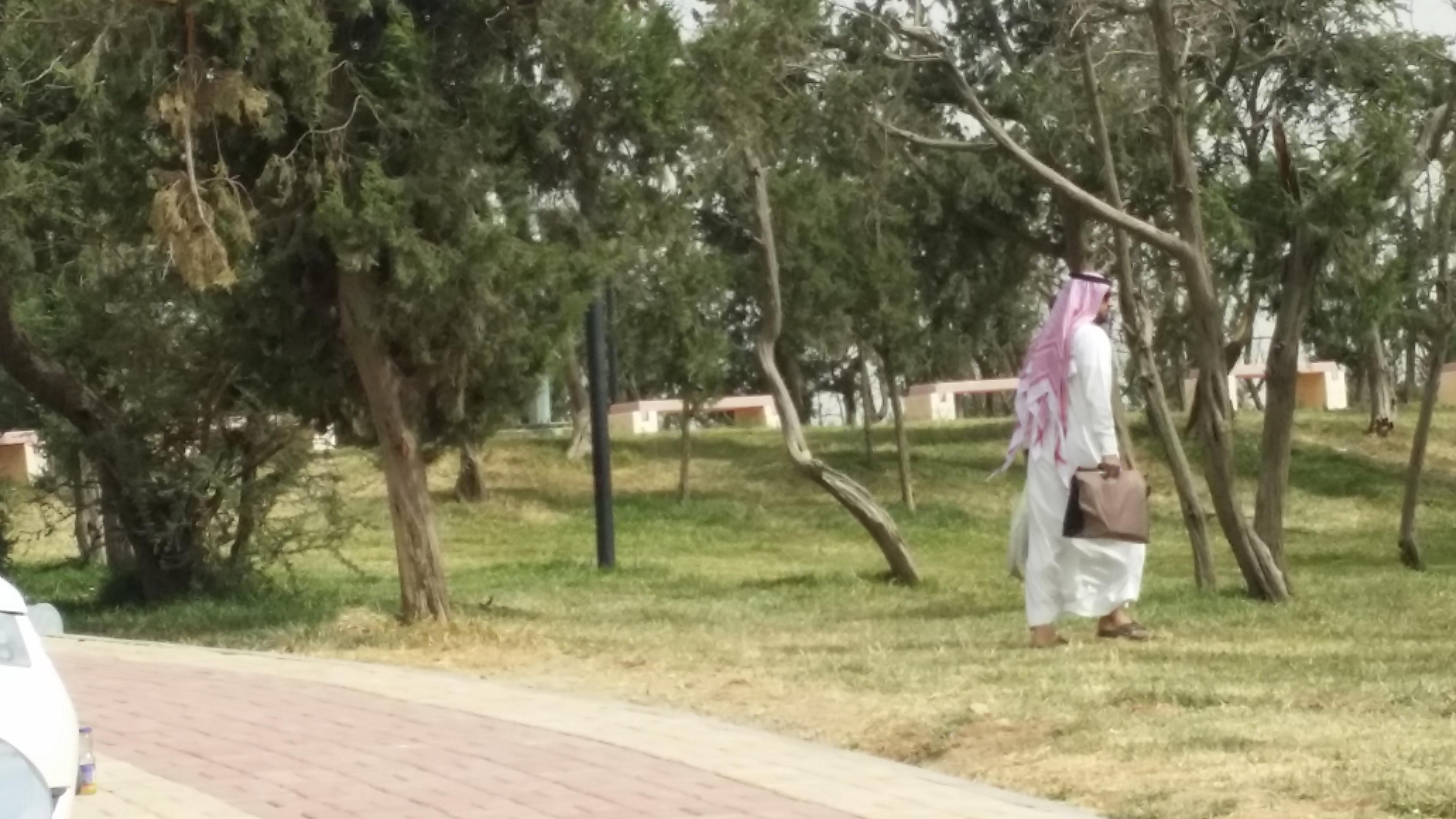 غابة رغدان الباحة (8)