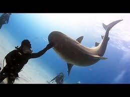 شاهد.. سمك قرش يلعب مع غواص - المواطن